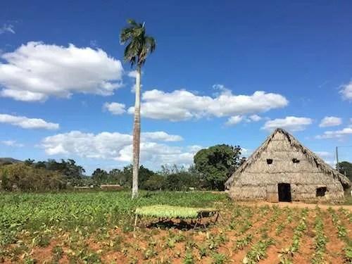 Tobacco hut Vinales Cuba