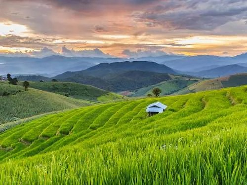 Chiang Mai rice fields Thailand