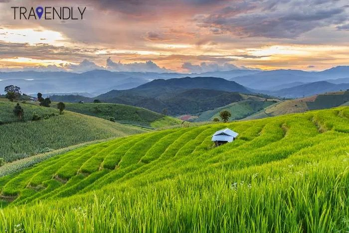 Chiang Mai rice fields Thailand group travel