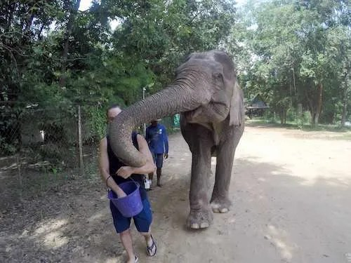 Hungry Elephant feeding Thailand group vacation