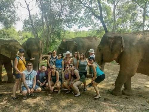 Elephant nature park elephants around group