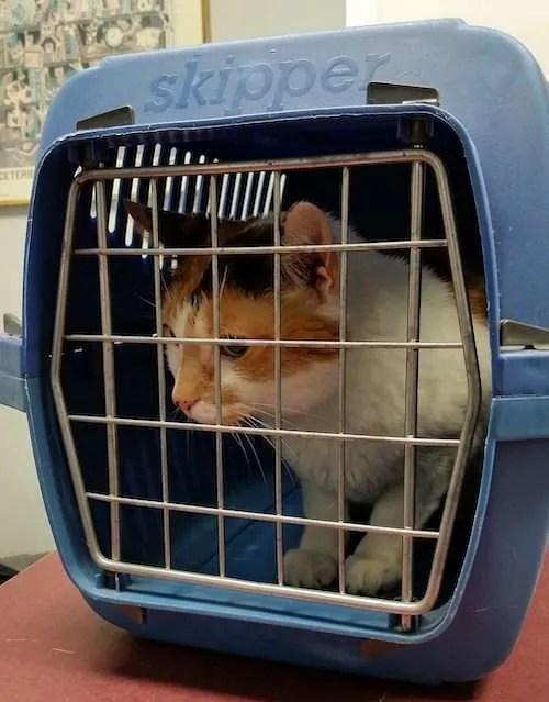 cat crate travel