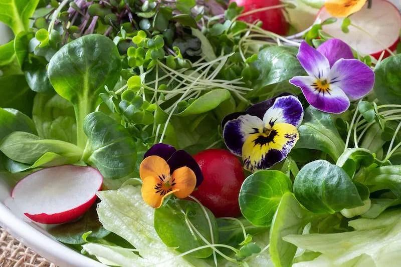 Edible flowers in salad Cusco