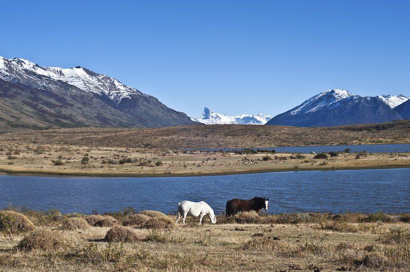El Calafate scenic horses