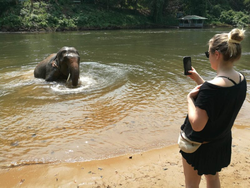 Elephant coming out of the water