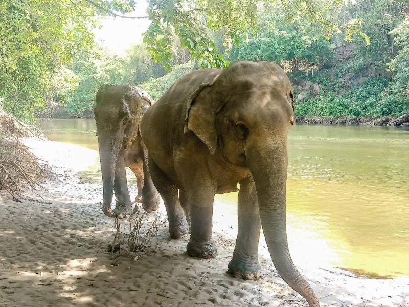 Elephants ready for bathing Thailand