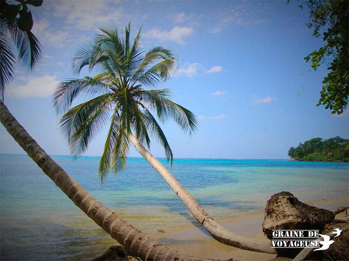 Grande de voyageuse - Costa Rica - Parc national Cahuita