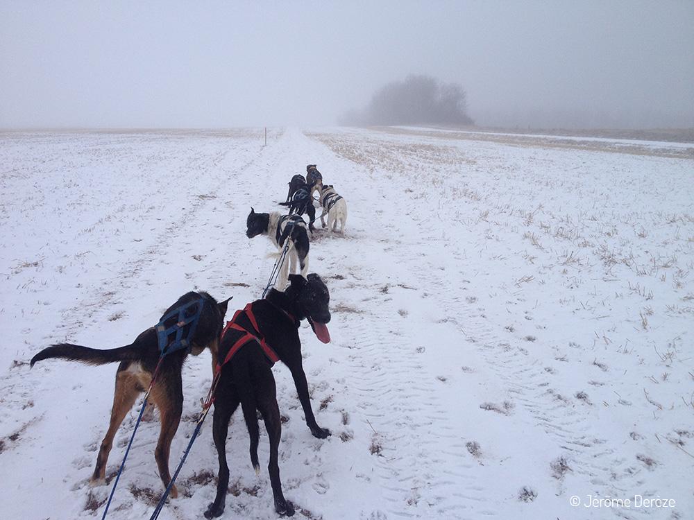 11 raisons de partir en PVT - Apprendre un nouveau métier et entraîner des chiens de traineau