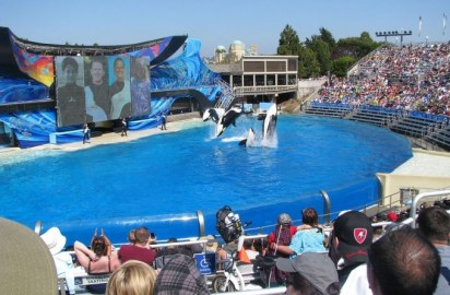 Seaworld sees profits fall again