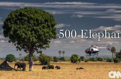 """La fase final de la histórica transposición de """"500 elefantes"""" ya está en marcha"""