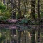 Lake @ The Memorial Gardens