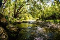 a tree next to a river