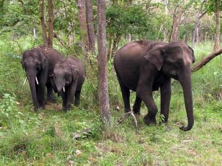Mudumalai Wildlife Sanctuary, Ooty - Timings, Safari cost, Best time to  visit
