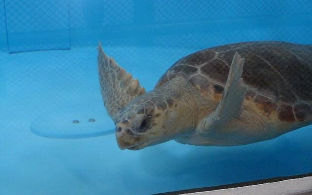Image result for sea turtle rehabilitation center florida jupiter