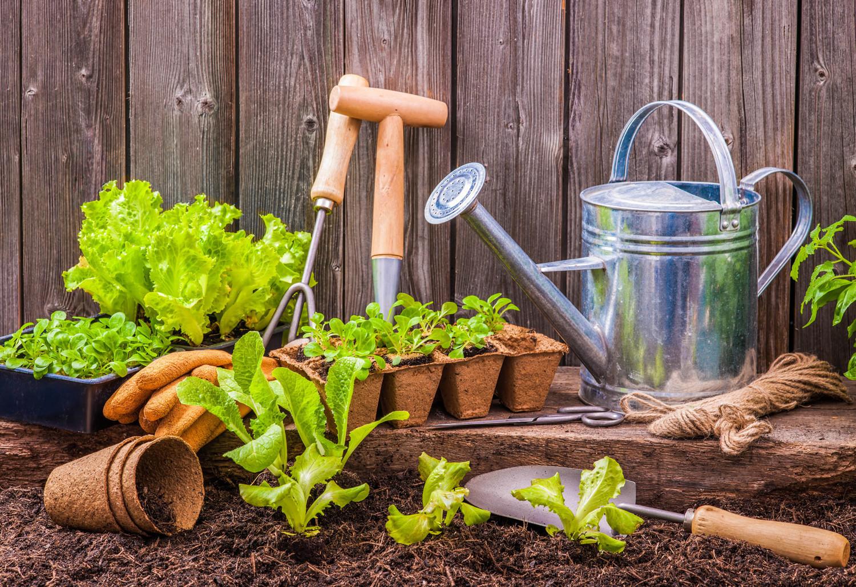 Garden tips: Did you know ..? - Pomerado News on Gardening  id=35263
