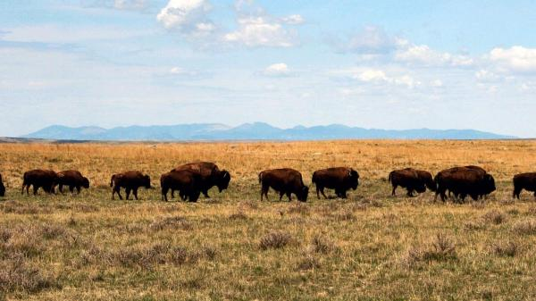 New book series seeks to define the Great Plains - Chicago ...