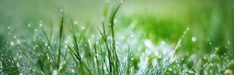 cropped-green-nature-grass-water-drops-hd-wallpapers2