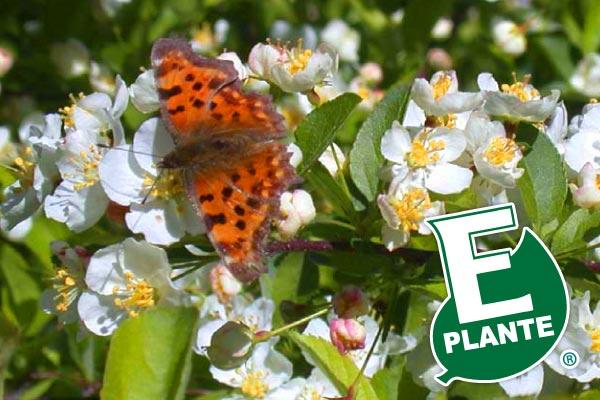 E-plante