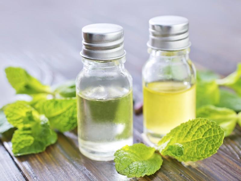 Peppermint Oil in your Medicine Cabinet? - Treasure Coast ...