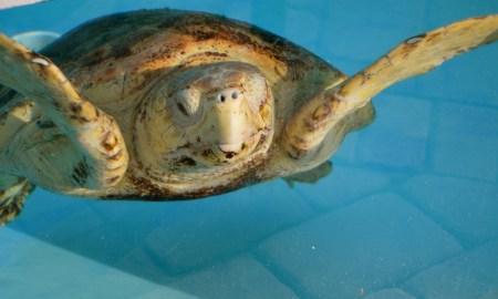 Sea Turtle Nesting Season Begins March 1 – Nov. 15