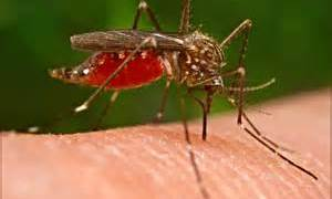 PREVENT MOSQUITO BREEDING AFTER HURRICANE IRMA