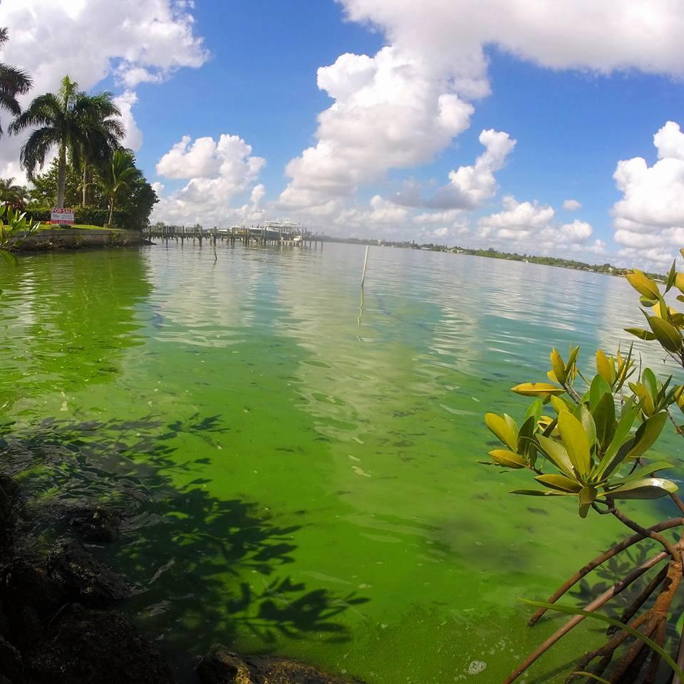 Toxic Green Algae: Awaken State Legislators! State or Federal Someone has got to help!