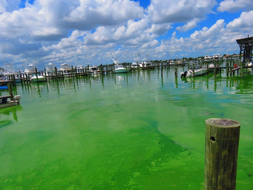 Toxic Algae: Call your legislators and sign our petition please photo: Rebecca Fatzing