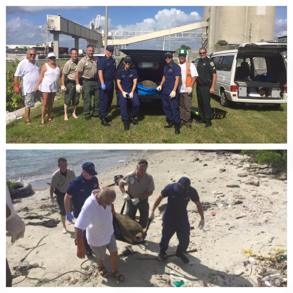 BREVARD COUNTY SHERIFF'S OFFICE MARITIME SECURITY OFFICERS AND UNITED STATES COAST GUARD MEMBERS SAVE DISTRESSED LOGGERHEAD TURTLE