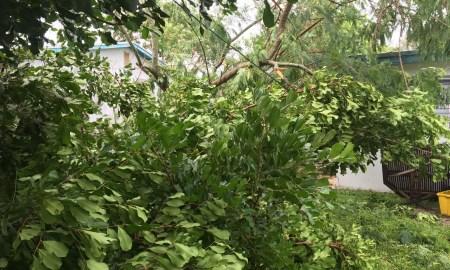 Martin County begins Hurricane Matthew debris collection