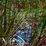 Birding trail Visitor Center Merritt Island Wildlife Refuge photo: cyndi lenz