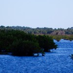 Merritt Island Wildlife Refuge photo: cyndi lenz