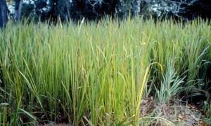 UF/IFAS, agencies collaborate to help landowners fight invasive species
