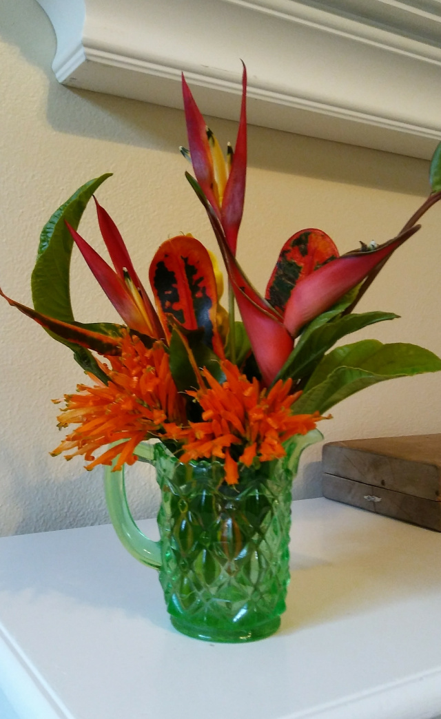 The Shrub Queen: Tropical Depression Heliconia
