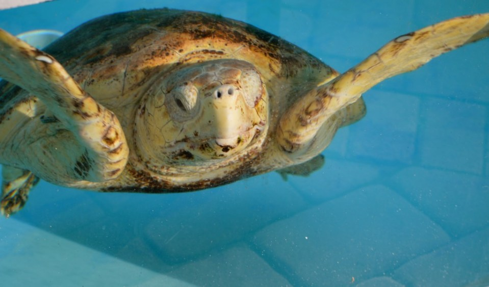 Help Protect Sea Turtles
