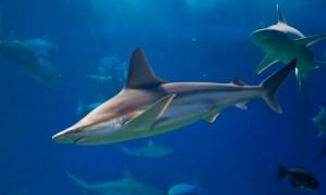 Jupiter diver possibly bitten by a shark