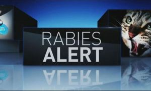 RABIES ALERT ISSUED FOR PALM CITY