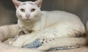 Pet of the Week:Ditto
