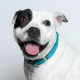 Rescue Pet of the Week: Nena