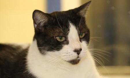 photo Marlen HurterHSVB/IRC Pets of the Week Dec 19