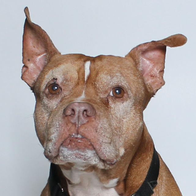 HSTC Pet of the Week Dec 28th: Tyson