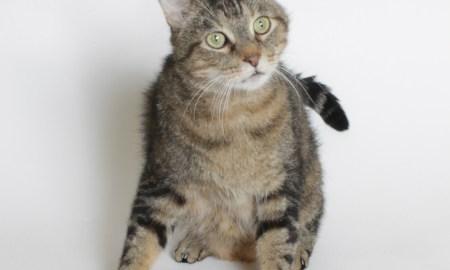 HSTC Pet of the week Feb 24: Evan