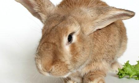 Humane Society of the Treasure Coast Pet of the week: Phoenix