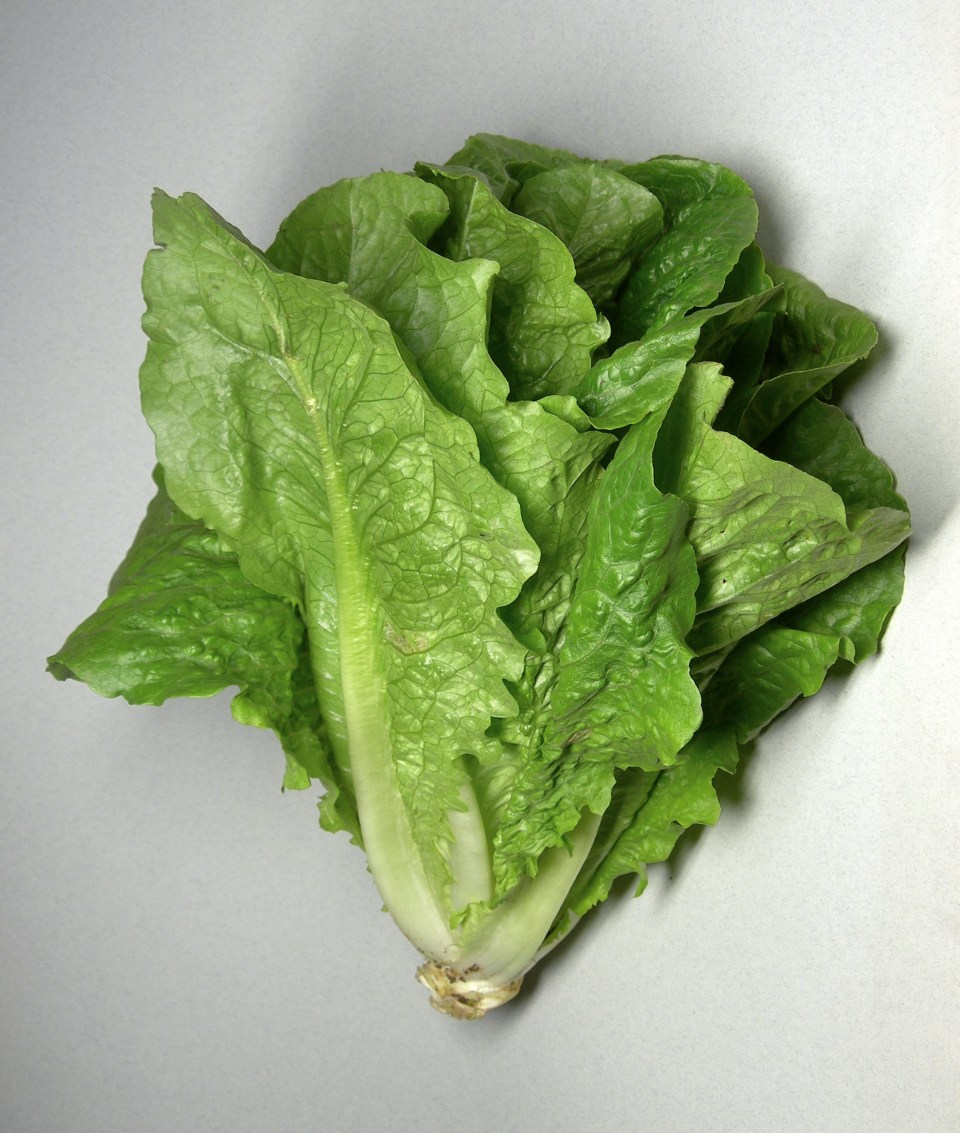 Multistate Outbreak of E. coli Infections Linked to Romaine Lettuce