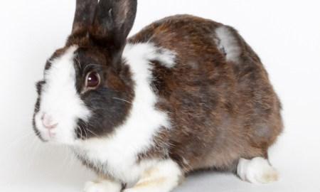 Zigler HSTC Pet of the Week May 18