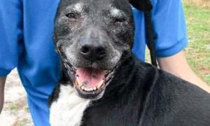 Rex HSTC Pet of the Week May 11