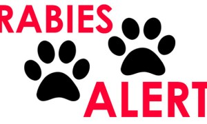 Rabies Alert issued in Indian River County