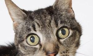 June 1 Pet of the Week: Mrs Oscar