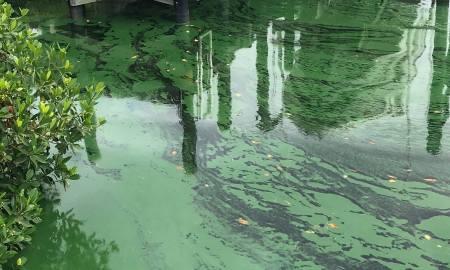 Survey regarding Lake O discharges Please Participate