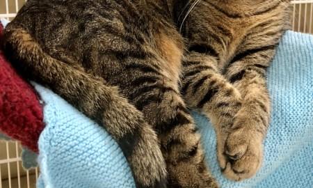 HSTE July 6 Pet of the Week: Zeus