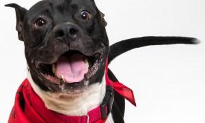 BOY: HSTC Pet of the week 10/12/2018